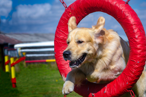Dog Training: Tricks And Tip The Professionals Usage
